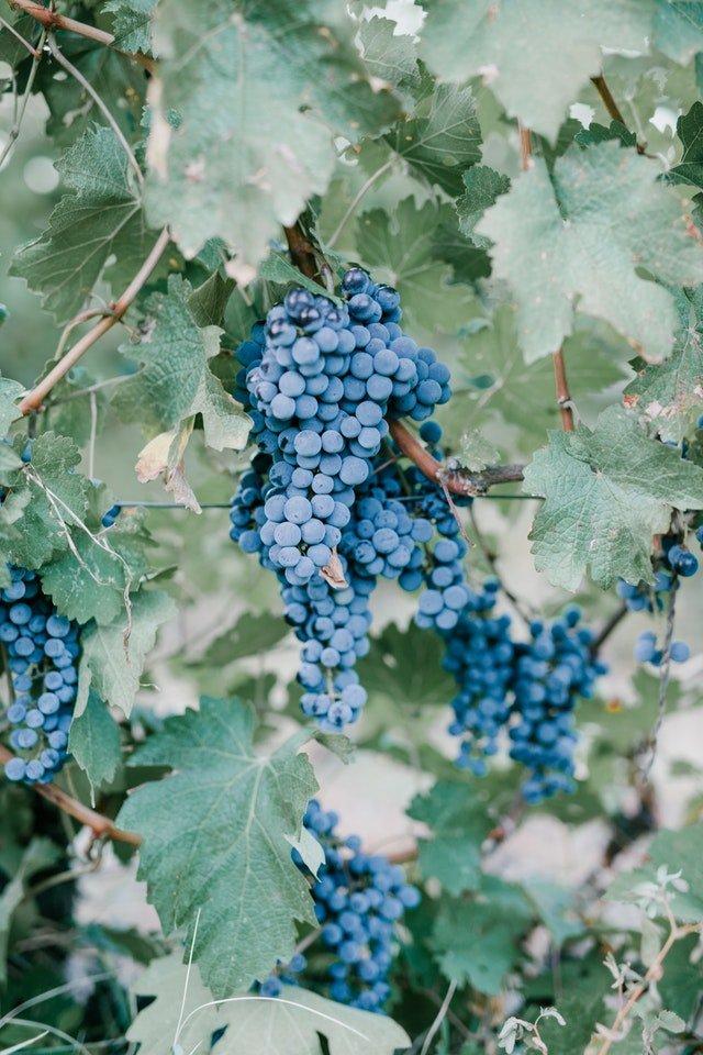 El año de la industria vitivinícola